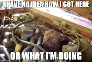 DOG IN ENGINE