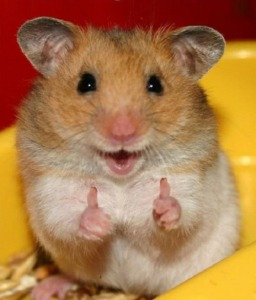 hamster thumbs up