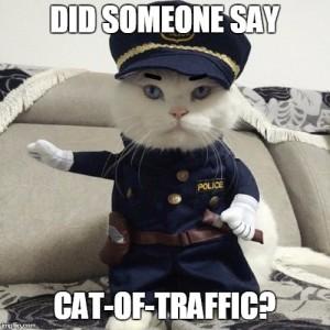 traffic cat emem