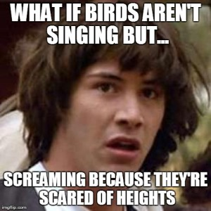 Birds are Screaming